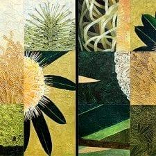 Banksia Marginata x 2