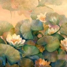 Creamy Water Lillies