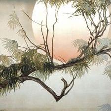 Eucalyptus Moon